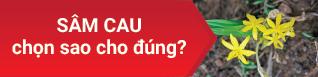 Tư vấn miễn phí